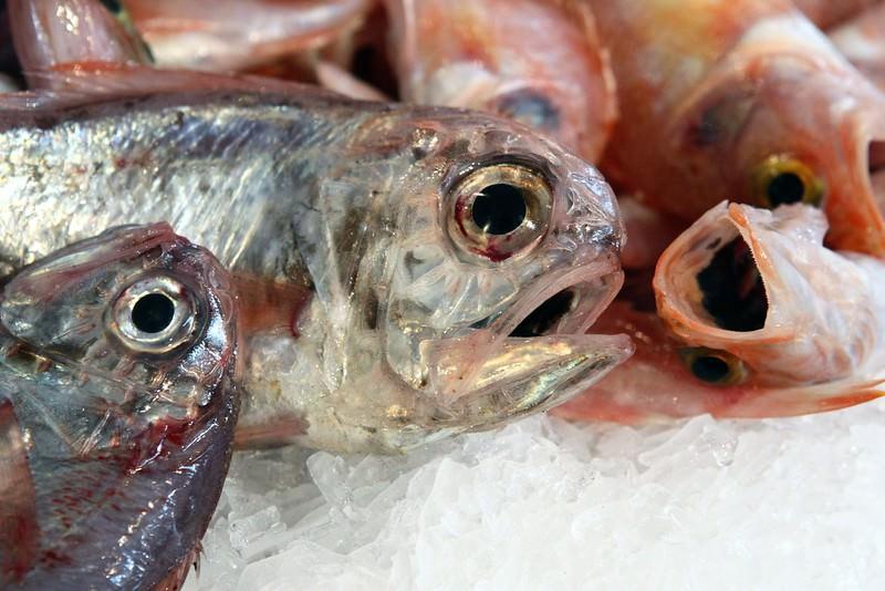 Pesci a gennaio,Pesci a dicembre, Pesci d'estate, pescI di stagione , quale comprare. Ecco il calendario del pesce